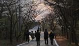 대산읍 망일산 벚꽃길 조명 점등식 가져